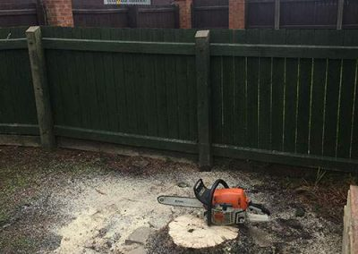 Tree Surgeon - Affordable Tree and Garden Care Tree removed