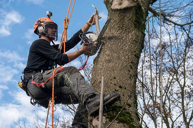 Affordable Tree and Garden Care Services - Tree Care Services