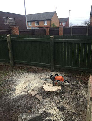 Tree Surgeon Runcorn - Tree after removal