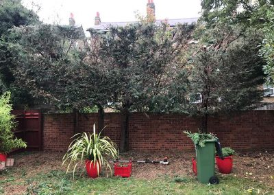 Tree Surgeon - Affordable Tree and Garden Care Tree Maintenance