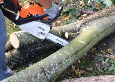 Tree Surgeon - Cutting branches with chainsaw