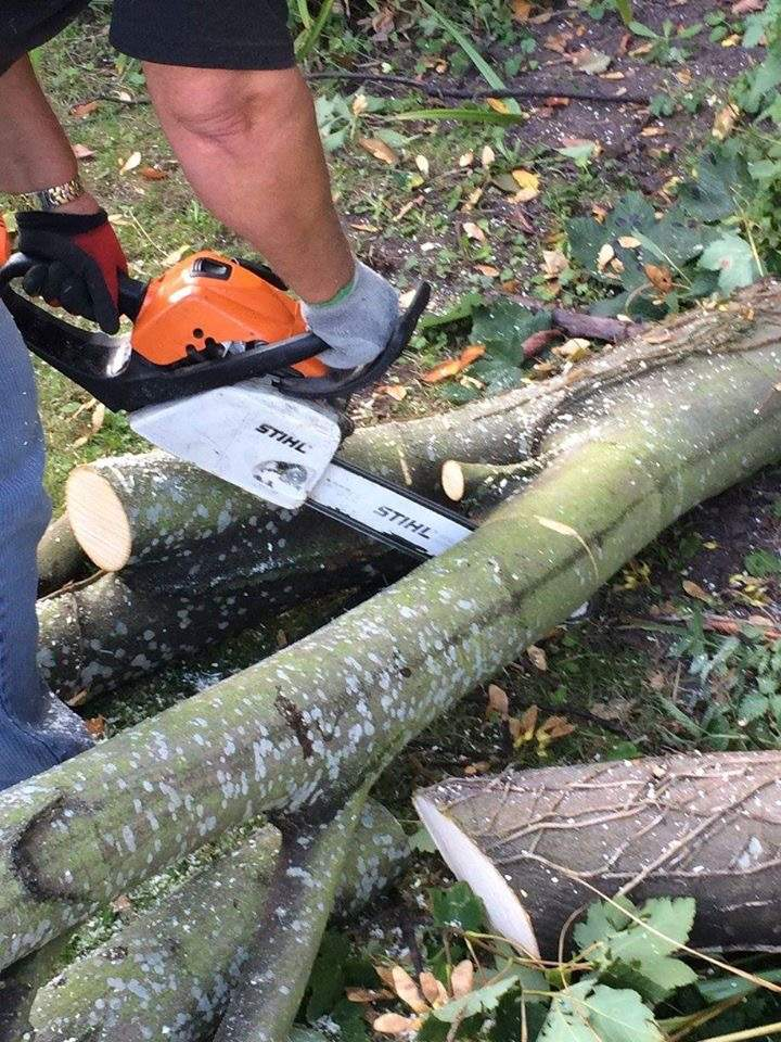 Affordable Tree and Garden Care Services - Tree Surgeon at work