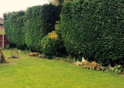 Tree Surgeon - Hedges trimmed