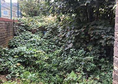 Tree Surgeon - Overgrown Garden before clearance