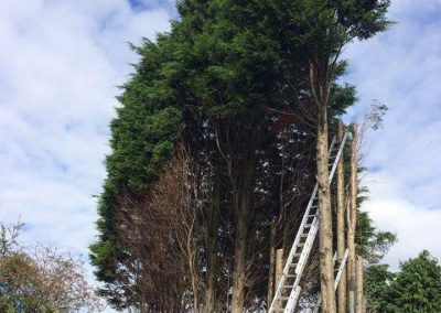 Tree Surgeon - Tree work