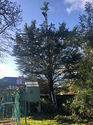 tree surgeon wirral